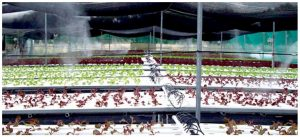 Agricultural Greenhouse and Livestock Misters